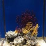 Aquarium_Reinhard Grieger_pixelio.de